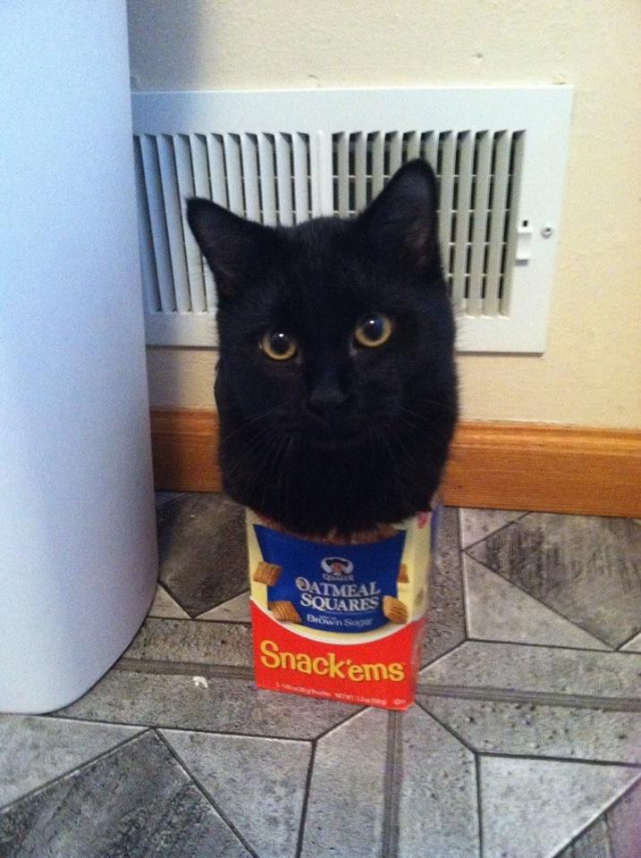 Fuck your logic I'm a cat!. . Fuck your logic I'm a cat!