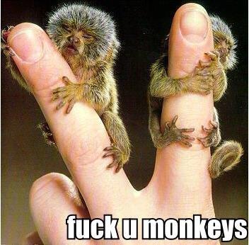 fuck u monkeys. u monkeys.. they are pokemon. POcKet MONkeys. fuck u monkeys