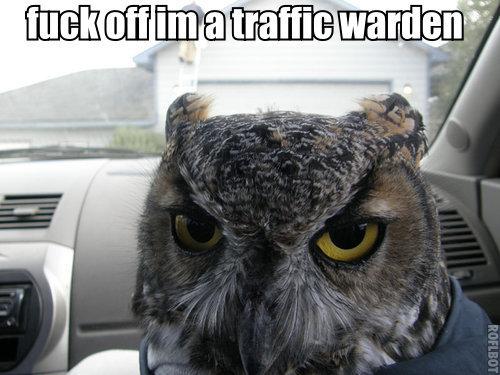 fuck off im a traffic warden. off im a traffic warden.. Why so serious? lulz drug flox Owls Drugs funny lol lulz fuck off im a tr