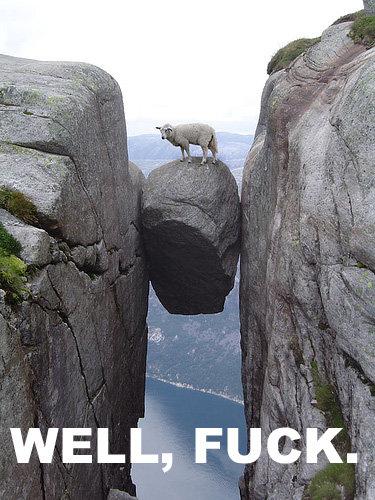 Fucked Sheep. .. ;p Beastiality FTL Fucked Sheep ;p Beastiality FTL