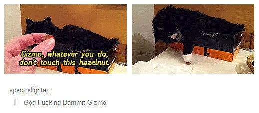 Fucking Rebel. Asshole cat doesn't listen very well.. spect_ relight_ er: God Fucking Dammit Gizmo God dammit GIZMO
