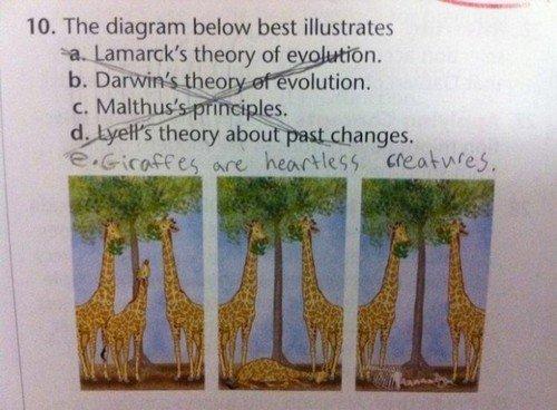 fucking giraffes. . The diagram below best illustrative fucking giraffes The diagram below best illustrative