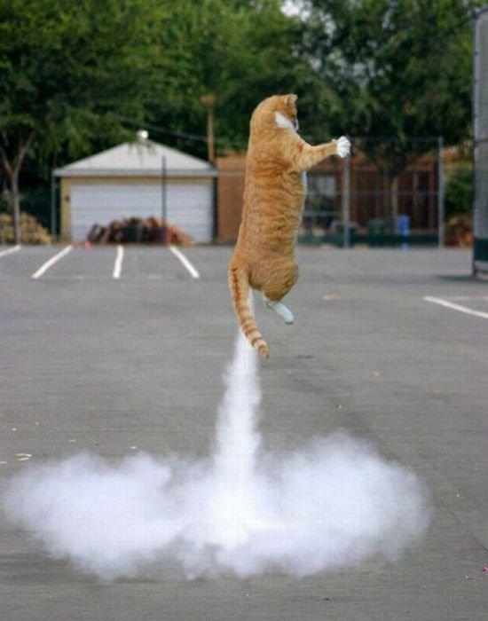 Funny Cat Flying. Funny Cat Flying. Funny Cat Flying