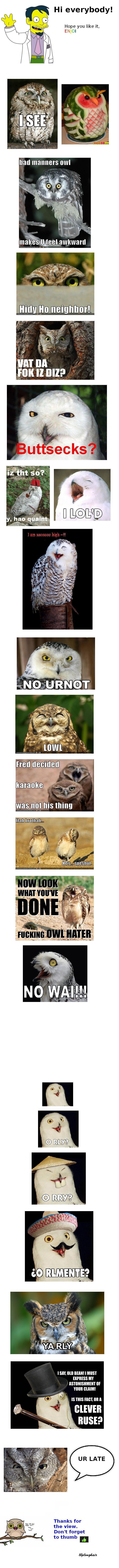 Funny Owl Compilation. Hope you like. <br /> Ya rly.. Hi everybody! Hope you like it, EN OI Ill, i! neighbor! Inn nu you llolol? 4 Fred decided karaoke .  owl compilation funny lol