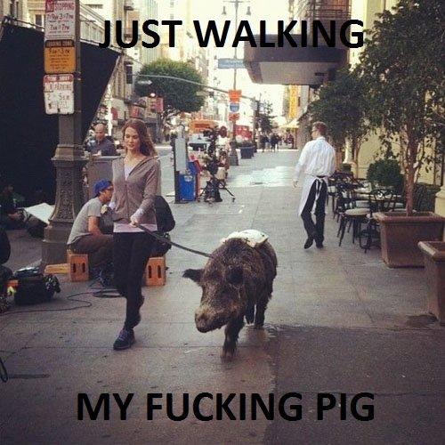 Just Walking.... My pig!. walking pig boar animal funny
