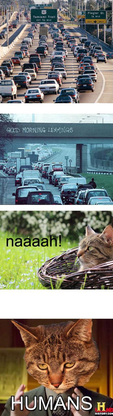 naaah!. oc oc oc. naaah Cats humans