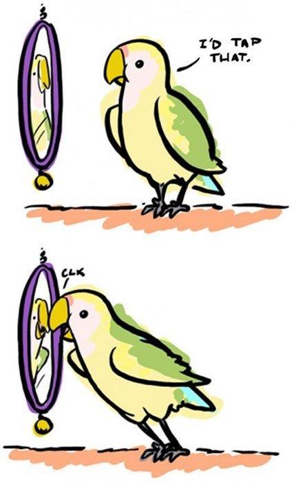 Narcissistic Bird. .. Aww. It's so cute. Narcissistic Bird Aww It's so cute