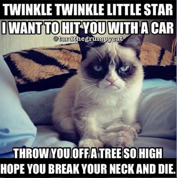 naughty little grumpycat. . naughty little grumpycat