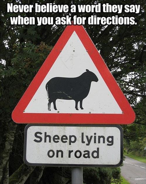 Never trust them. .. I bet they give baaaaaaad directions Never trust them I bet they give baaaaaaad directions