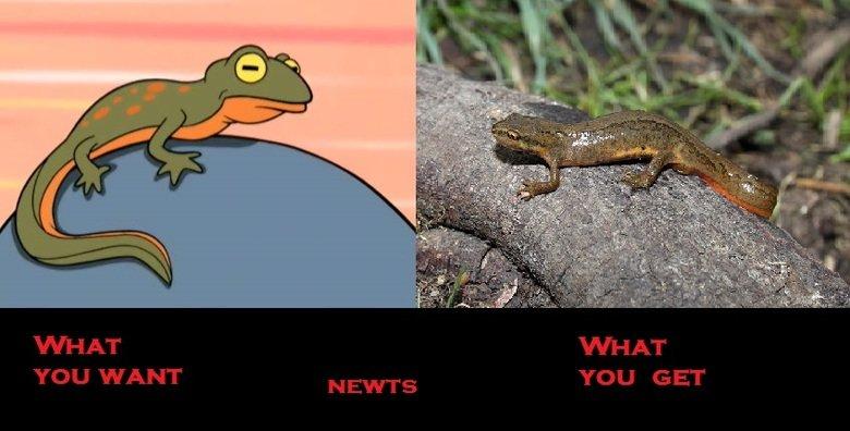 NEWTS. . NEWTS