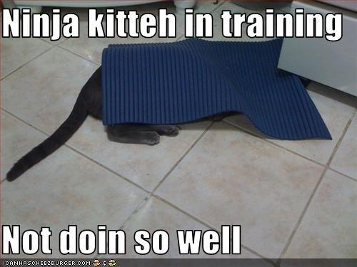 Ninja kitteh. fail.. what cat? lol cat