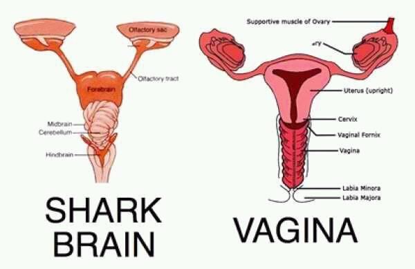 No wonder it's so evil.. It all makes sense now... O.O... Good job searching it... you deserve a thumb. :D shark brain vagina Evil