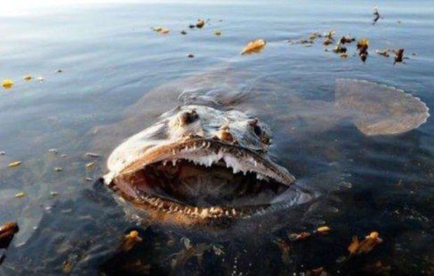 Nope nope nope. .. Good god... he's real... Fish nope monster water