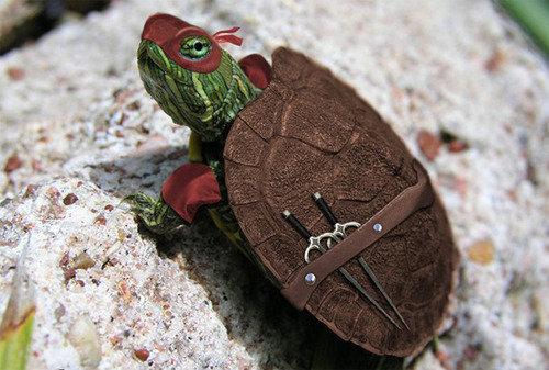 Real life Ninja Turtle. . Real Life Ninja Turtle