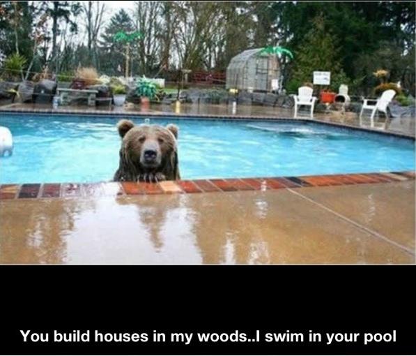 Revenge. . You build houses in my .. I swim in your pool Revenge You build houses in my I swim your pool