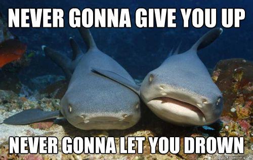 rick astley shark. . Shark puns Rick Astley