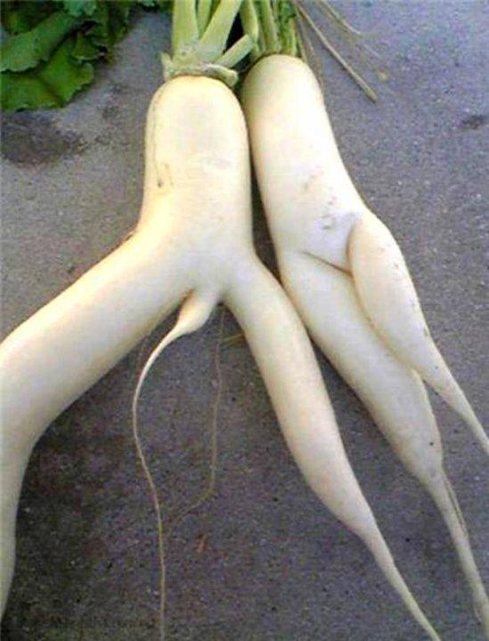 Veggie Tales. X-Rated. True OC.. u r Cute