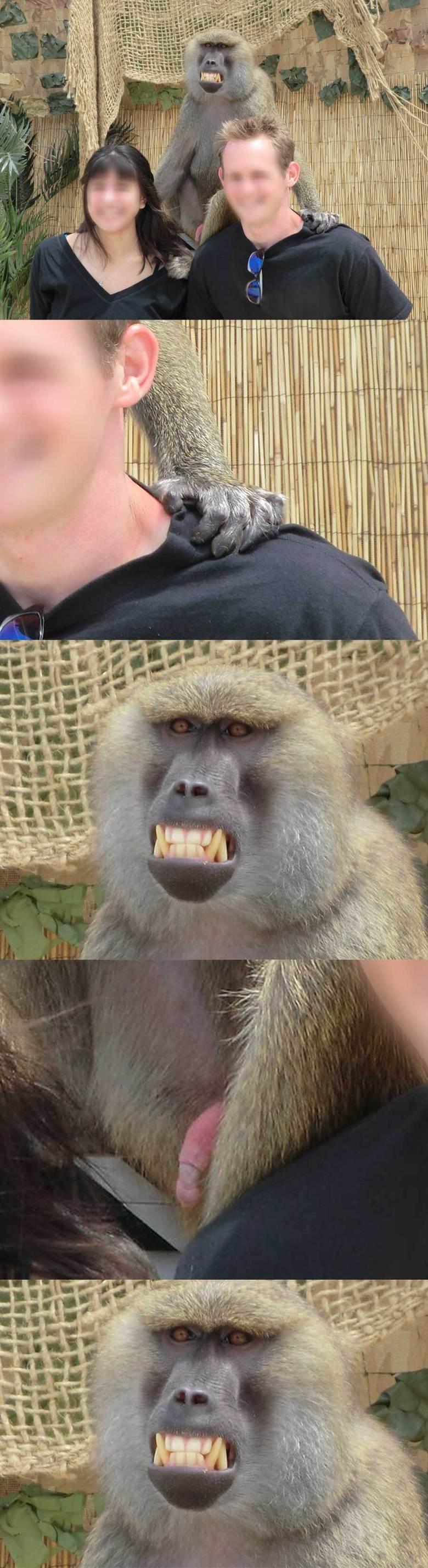 Zooom THREAD. WTF?. funny monkey cool gross interesting laugh meme