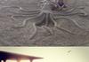Squid (read description)