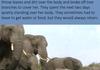 Elephant death ritual witnessed