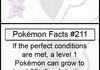 Pokemon Facts 11