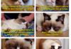 Not So Grumpy Cat