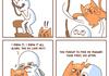Kitty needs