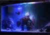 Shocking fish tank.